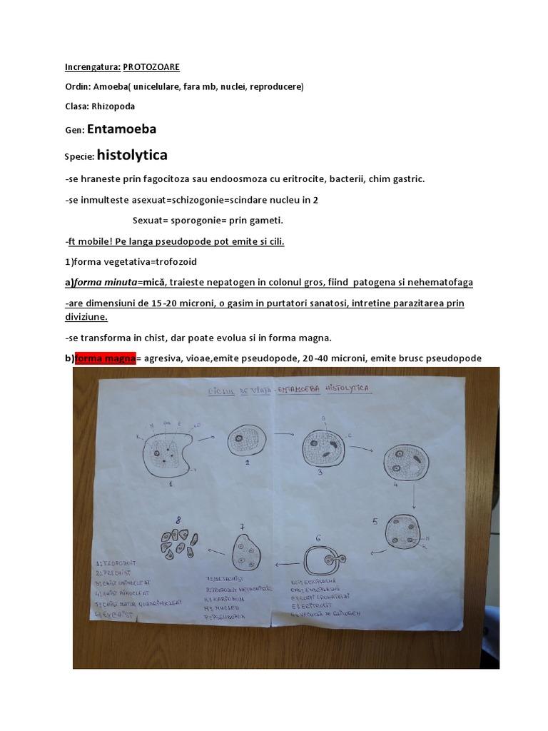 eritrocite parazite cancer sarcoma tratamento