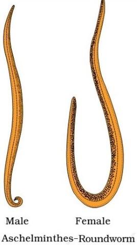 Phylum-Coelenterata