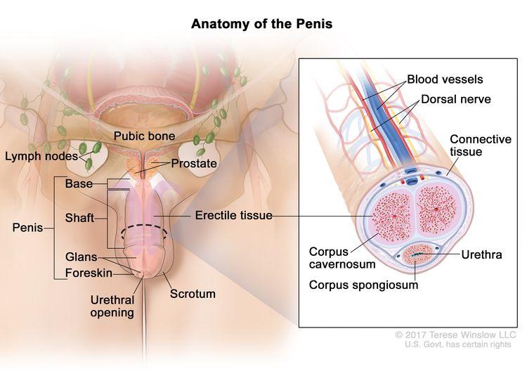 High risk hpv penile cancer