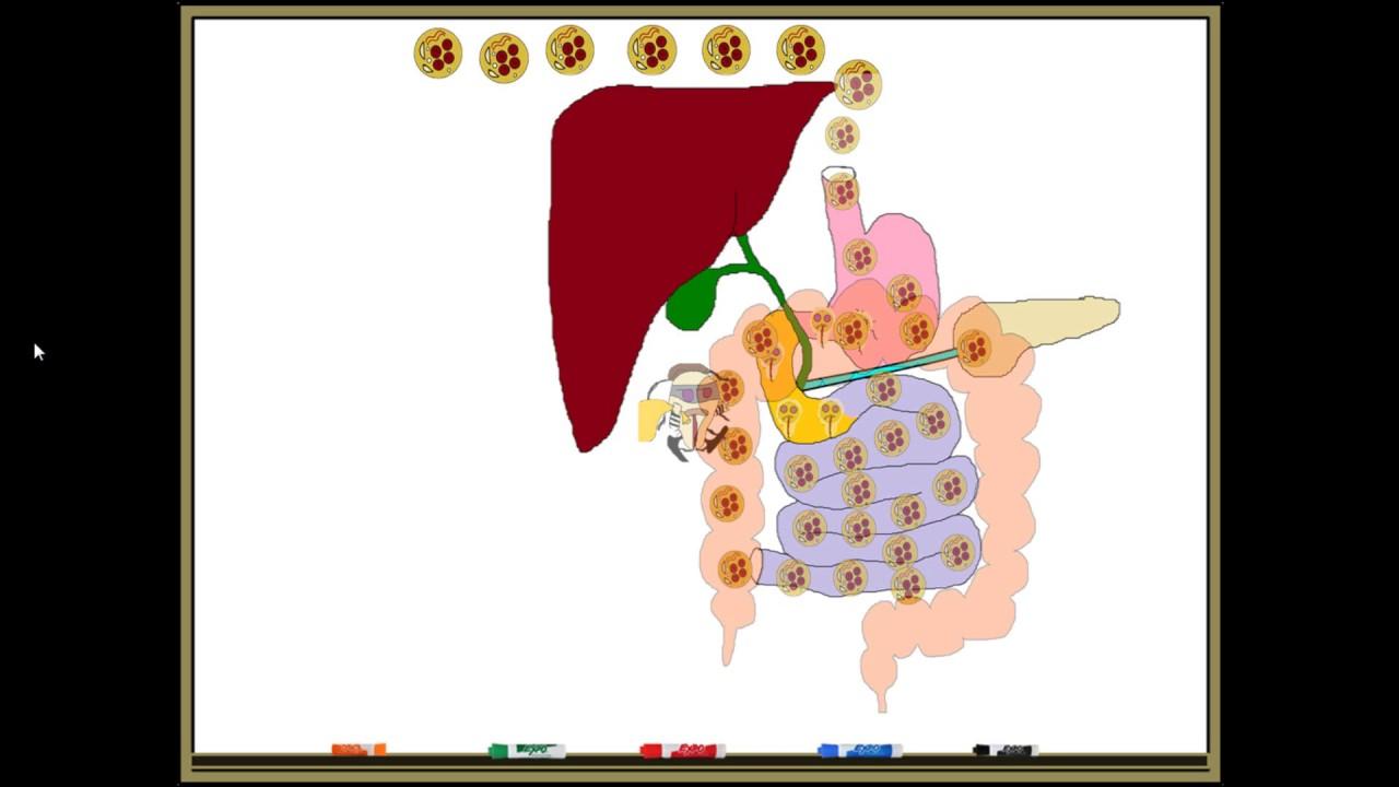 tratamentul giardiei și al helmintului