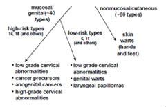 Human papillomavirus vaccine respiratory - hhh   Cervical Cancer   Oral Sex