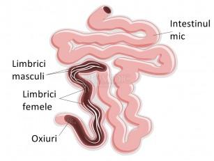 simptomele medicamentoase ale viermilor umani