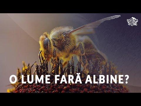 fără viermi împotriva insectelor