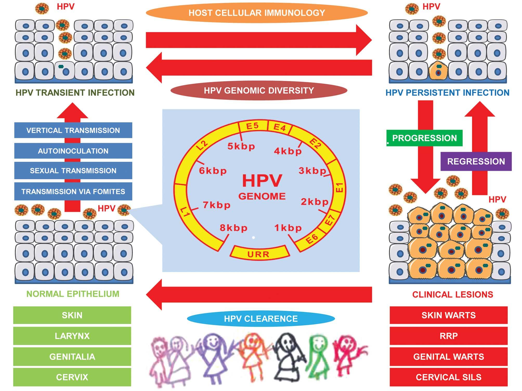 papillomavirus reservoir