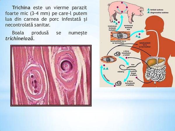 paraziti in plamani