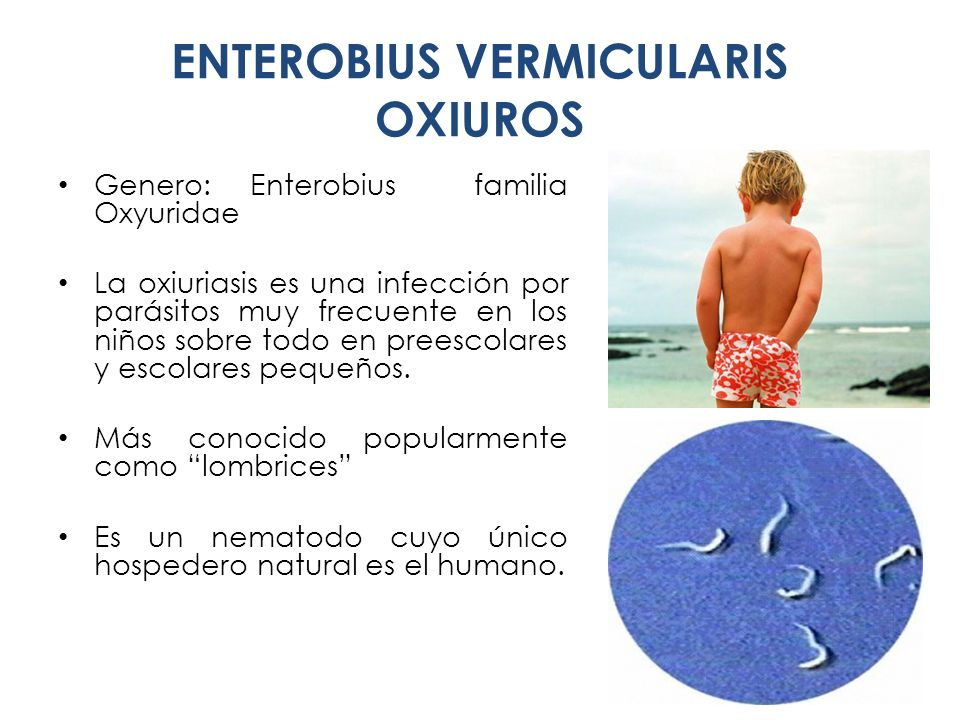 enterobius vermicularis reproduccion