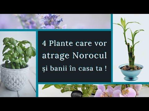 aranjator de flori parazite)