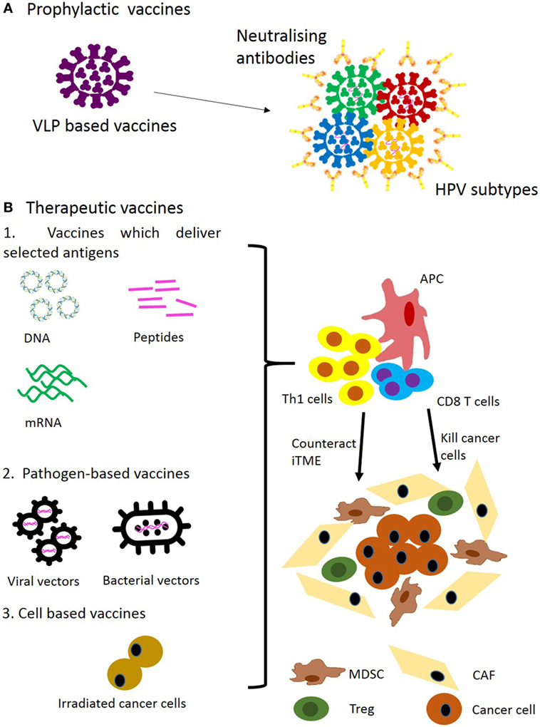 human papillomavirus vaccine pubmed)