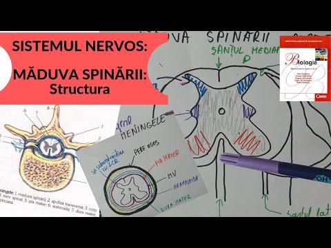 sisteme de tratare helmint