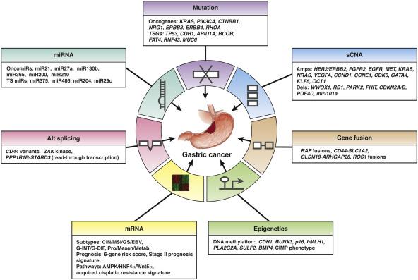 gastric cancer molecular subtypes)