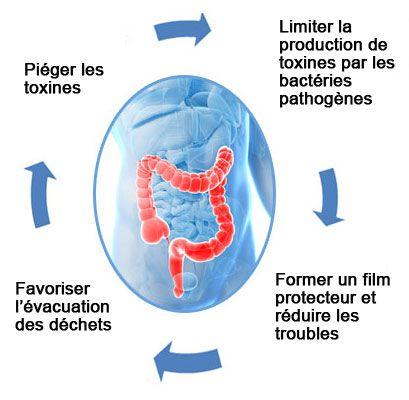 detox colon ineldea