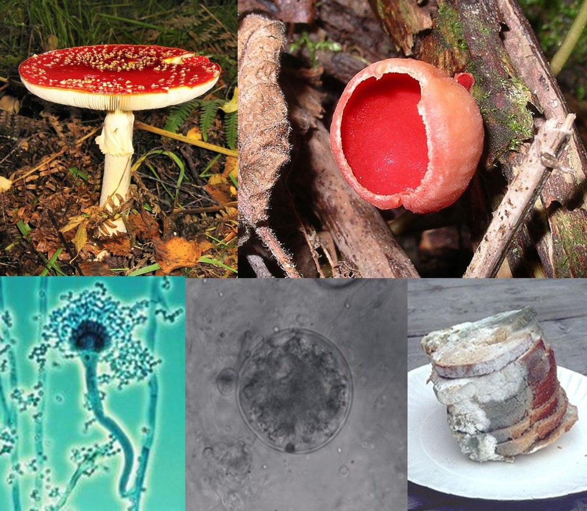 tratament cu ciuperci pentru paraziți)