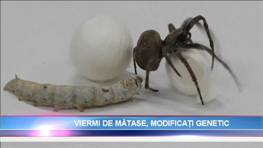 medicamentul cu vierme helmifag îndepărtarea verucilor genitale la recenziile femeilor