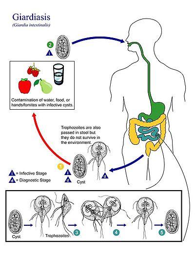 tratamentul verucilor plantare virale hpv high risk c 02 positive