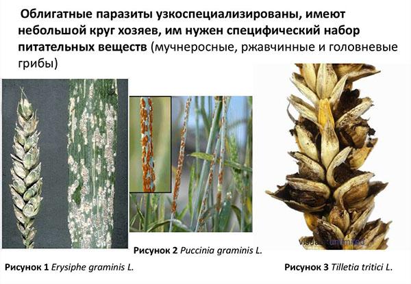 paraziți fungici