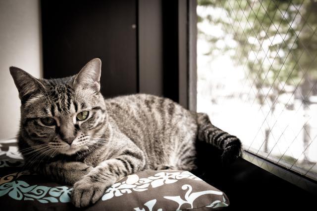 giardia gatto trasmissione uomo