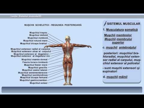 vierme în mușchi