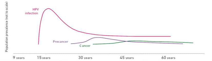 hpv to cancer rate)