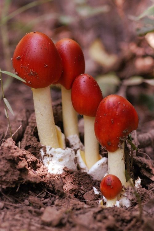ciuperci magice)