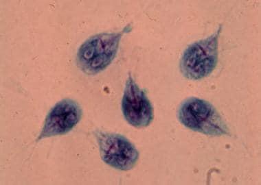 Puffadas de vierme