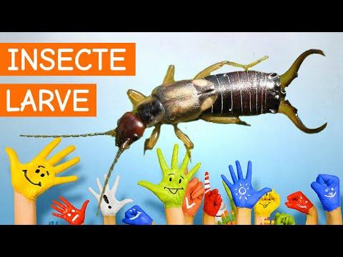 preparate avansate pentru prevenirea viermilor