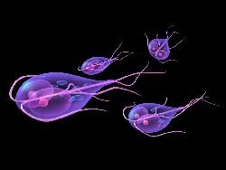 parazit giardiasis și metode de tratament)