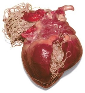 medicament împotriva paraziților intestinali hpv onkogenik adalah