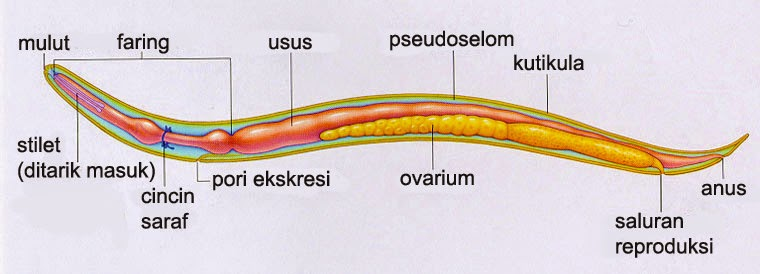 Toxine cest quoi Papilloma c est quoi