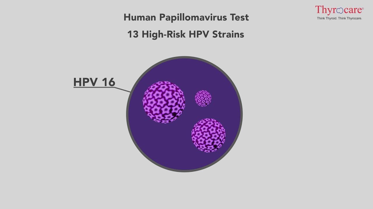 Meaning of papilloma virus
