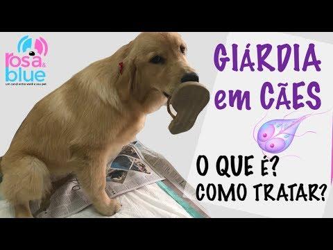 Giardia sintomas caes - triplus.ro