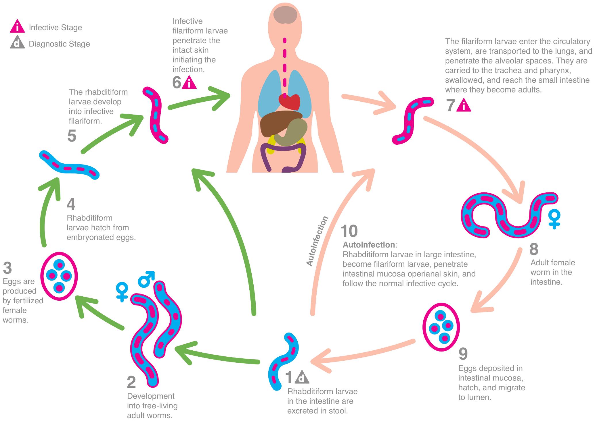 îndepărtarea uterului cu condiloame pancreatic cancer vertaling