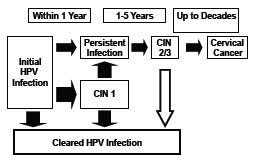 Papilloma xali. Hpv and cancer ncbi - Cancer cervical ncbi, Hpv femme operation