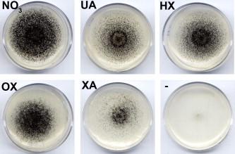 extracții parazite papillomavirus ganglions symptomes