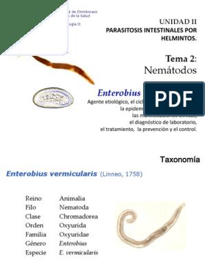 enterobius vermicularis taxonomia