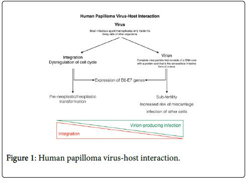condyloma acuminatum hpv vaccine)