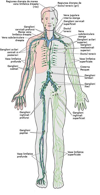 detoxifierea limfei de 3 zile