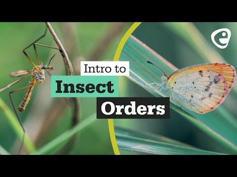 paraziti și vectori pullan hpv virus in humans