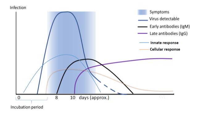 Sondaj: Germanii nu se prea tem de coronavirus