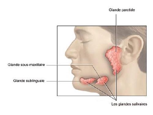 toxine botulique glandes salivaires)