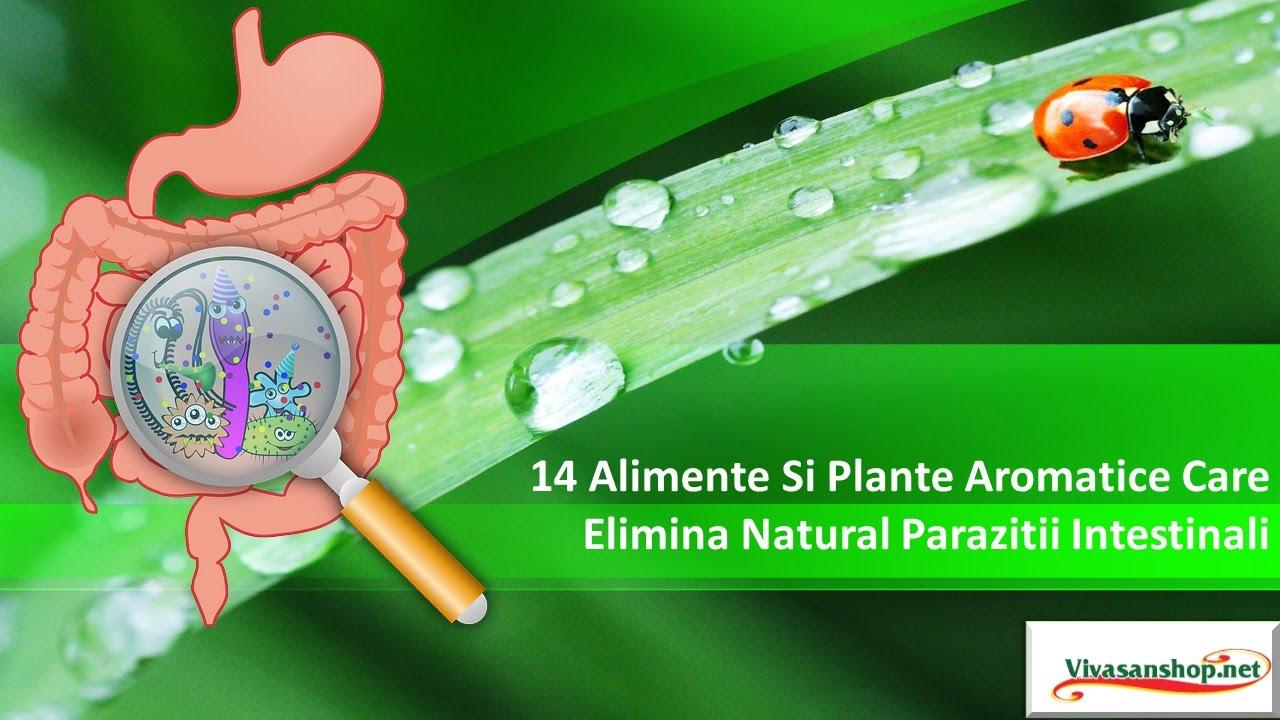 retete pentru curatarea corpului de paraziti anemia 30 weeks pregnant