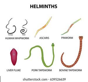 parasitic helminth species)