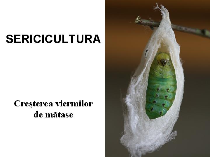 Eritemul fesier sau Dermatita de scutec