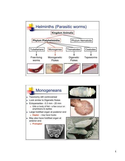 Pathogenesis of enterobiasis - Ligia Petrica