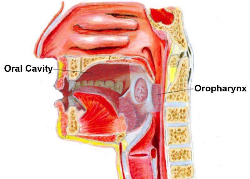 hpv positive throat