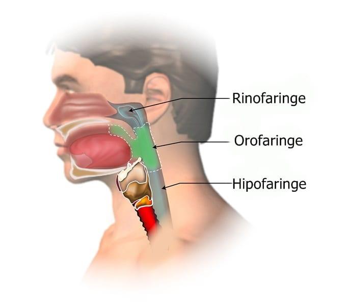 cancer orofaringian evolutie