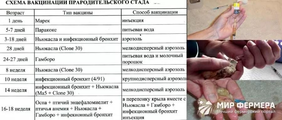 tratamentul helmintelor umane)