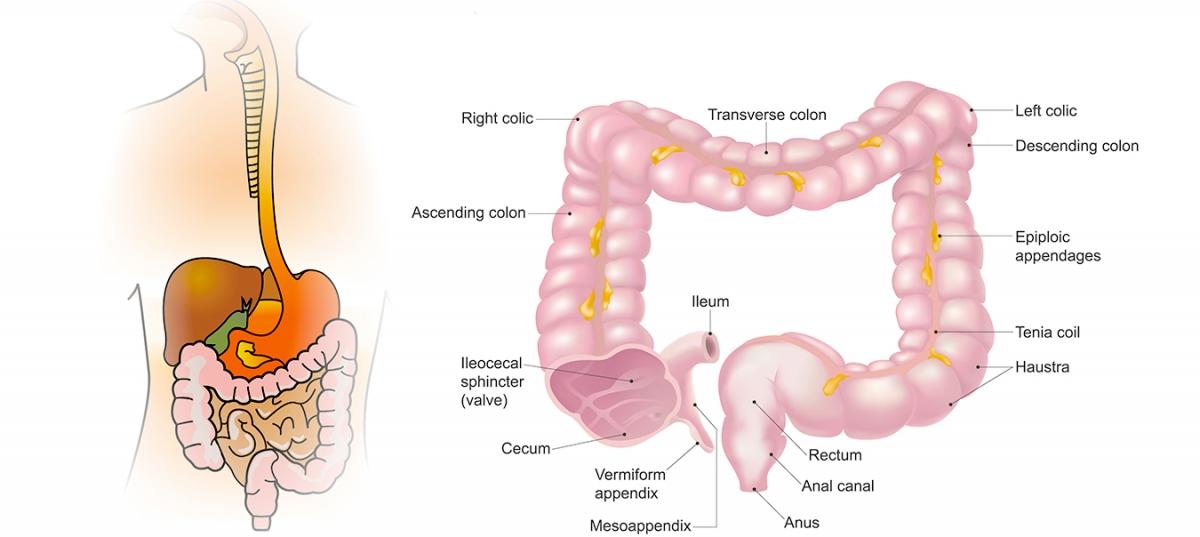 cum să dezintoxicăm colonul în mod natural)