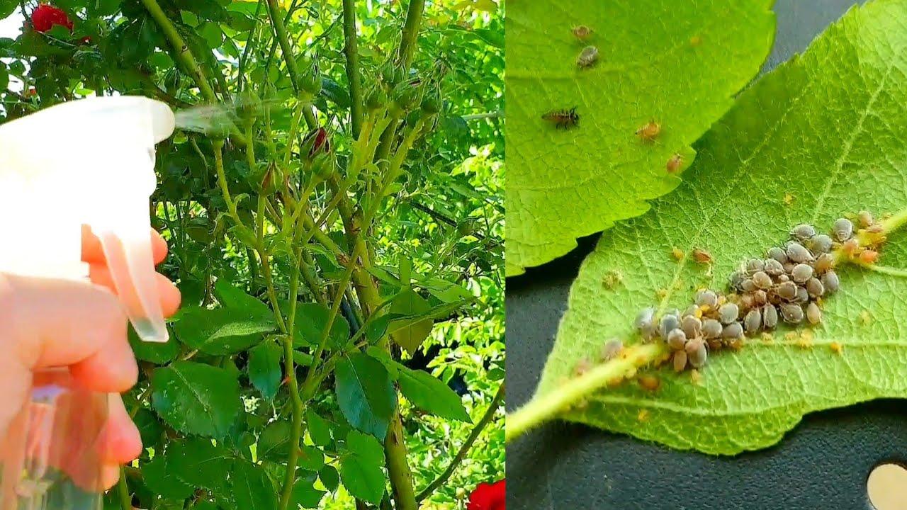 Ce boli transmit insectele din jur - Blogul triplus.ro