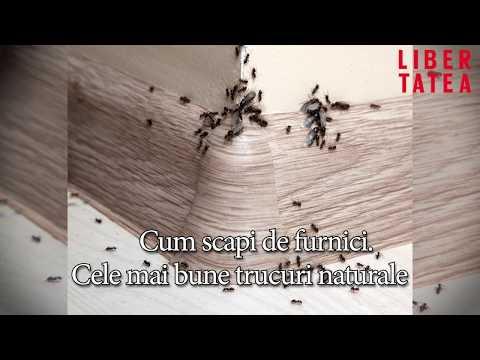 tratament cu bandă largă de helmint