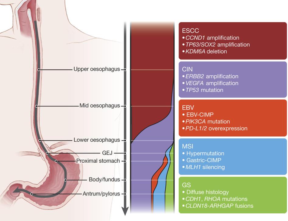 ciclul de viață al helmintiazei